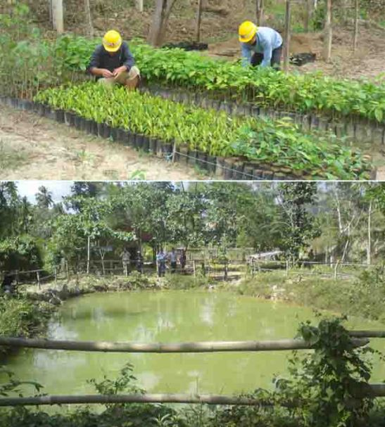 Nursery. Seedlings are prepared here at the border of Magsico and Bugho for the tree planing activities of Taiheiyo Cement Philippines, Inc. and Solid Earth Development Corp.