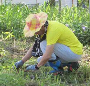 tcpi-tree-planting-1